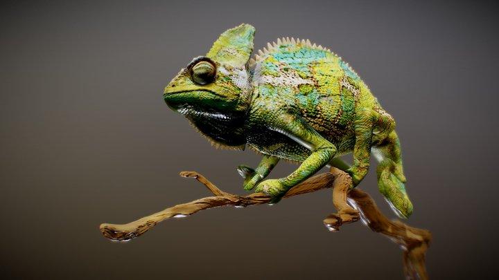 Chameleon Sculpt 3D Model