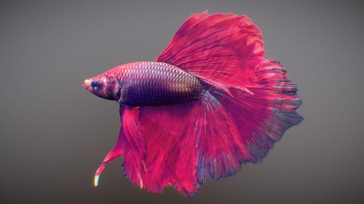 Tropical Fish 2 3D Model