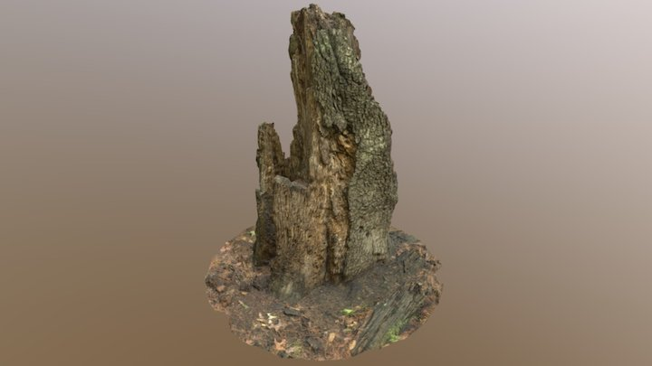 Rotted Stump 3D Model