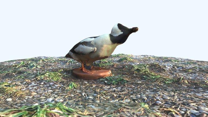 Bufflehead 3D Model