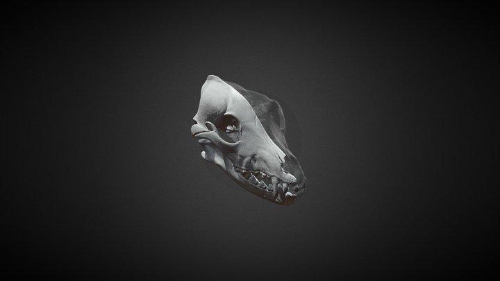 Wolf 50K 3D Model
