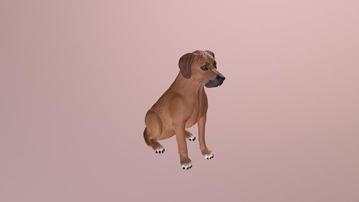 1801004 - Kodie the Rhodesian Ridgeback 3D Model
