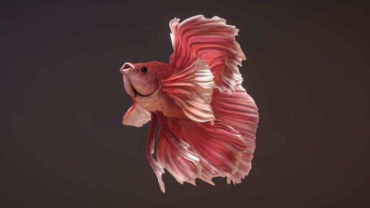 Dumbo Betta Fish 3D Model