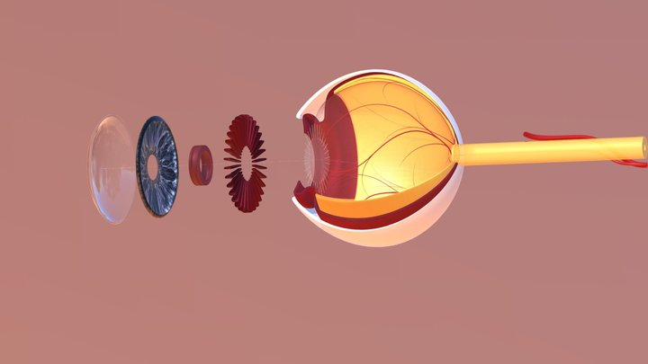 Eye Extension with Vitreous Humor 3D Model