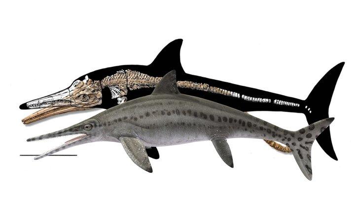 Platypterygius 3D Model