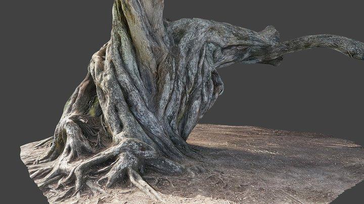Pohutukawa tree closeup 3D Model
