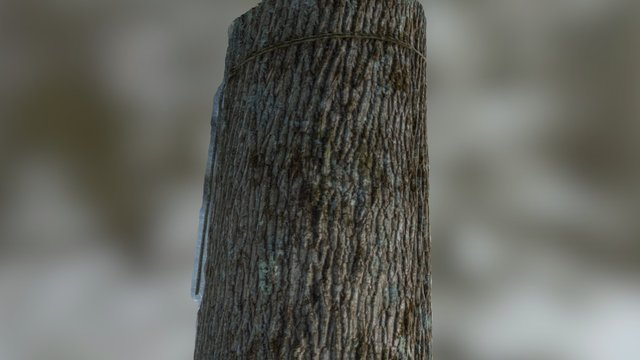 Tree Bark (Agisoft Photoscan) 3D Model