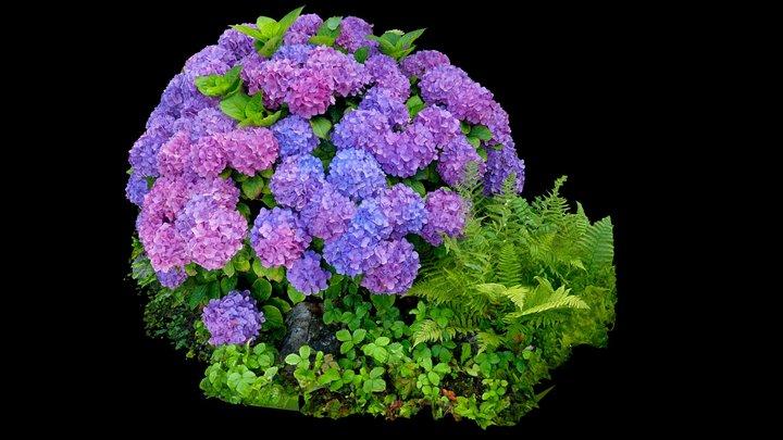 Hortensia - Hydrangea 3D Model