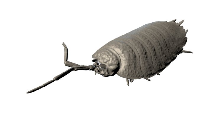Industrial X-Ray & CT Scan of Isopod 3D Model