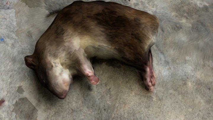 Norway Rat 3D Model