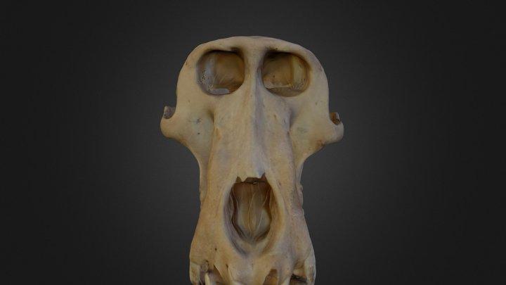 skull_finished_final.zip 3D Model