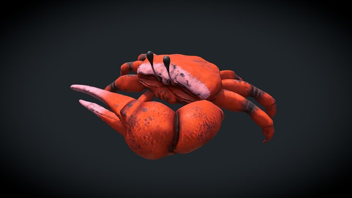 Fiddler Crab 3D Model