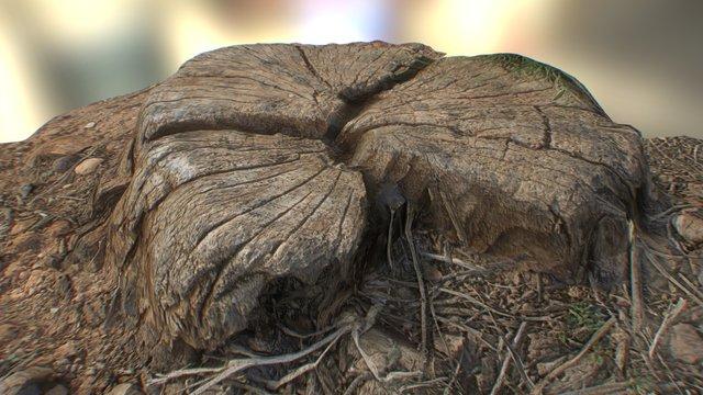 Dead tree log stump 3D Model