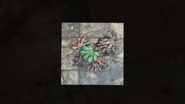 Leaves in Bloomsbury #SquareScanChallenge 3D Model