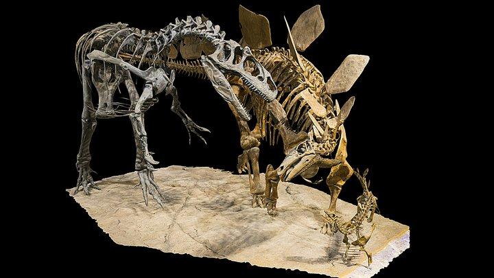 Stegosaurus stenops vs Allosaurus fragilis 3D Model