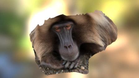 Gelada Face Test 3 3D Model