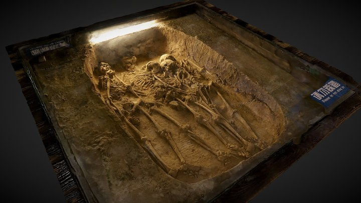 Skeletal Remains - Three Gorges Musuem 3D Model