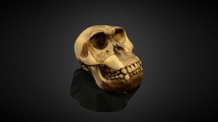 Homo Habilis 3D Model
