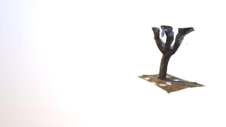 DendroPi Cork Oak 3D Model