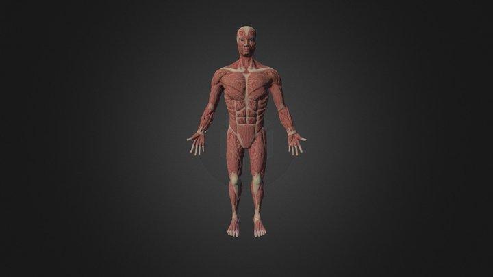 Ecorche 3D Model