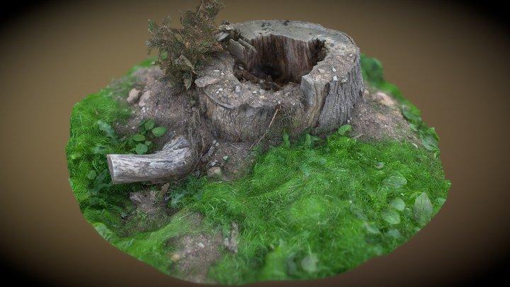Tree stumps challenge photogrammetry entry 3D Model