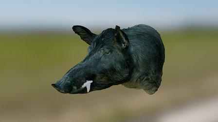 Wild Boar (textured) 3D Model