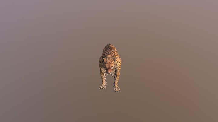 Leopard001-attack02 3D Model