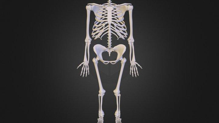 HomoErectus 3D Model