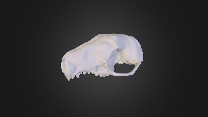 Erizo 3D Model