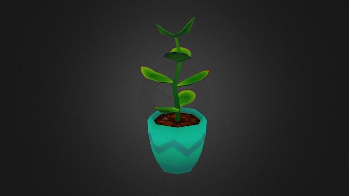 Jade Plant 3D Model
