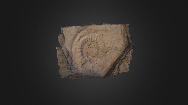 Nautilus Arc3d 3D Model