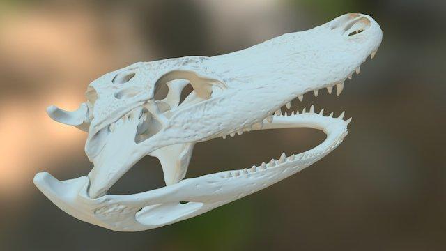 Alligator Skull 3D Model
