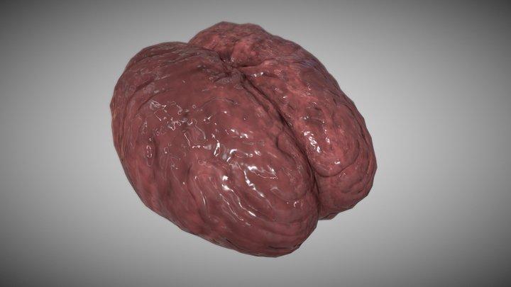 Simple Brain 3D Model