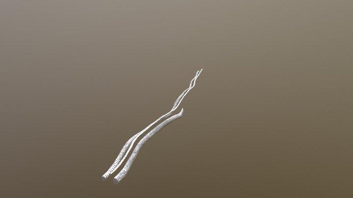 tracheids in Magnolia tepal 3D Model