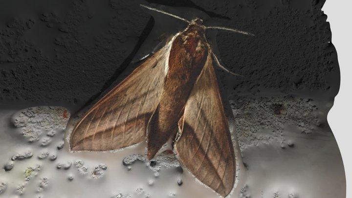 Moth 3D Model