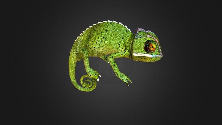 Chameleon 4 3D Model