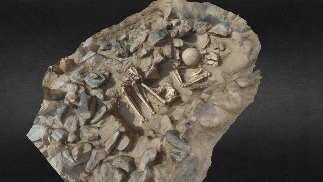 New Kingdom? Skeleton (Feature 32) 3D Model