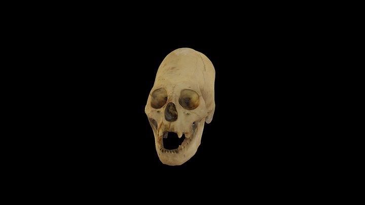 BIEN29 3D Model