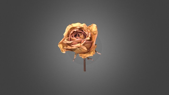 Dried Yellow Rose 3D Model