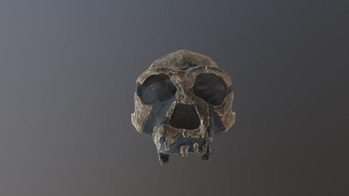erectus 3D Model