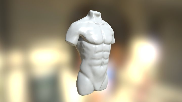 Male Torso Study 3D Model