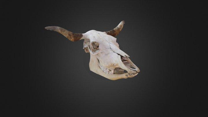 Skull of a cow 3D Model