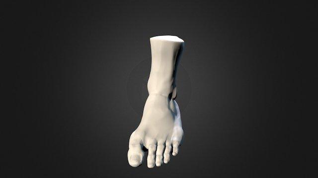 17 Foot 3D Model