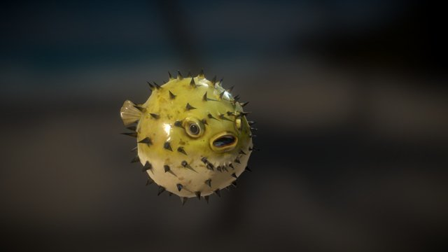 Blowfish 3D Model