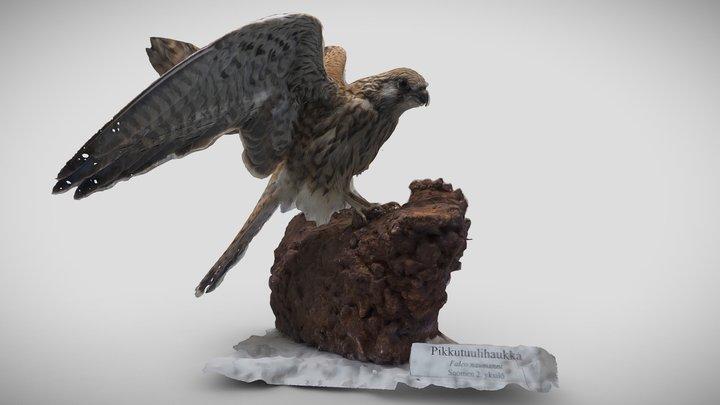 Pikkutuulihaukka (Falco naumanni) 3D Model