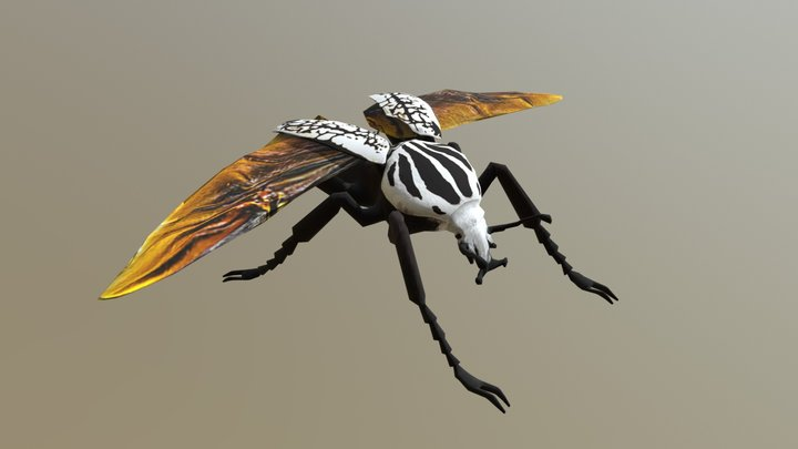 Goliath Beetle 3D Model