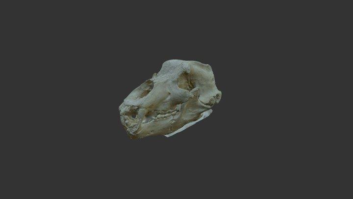 Ursus 2 3D Model
