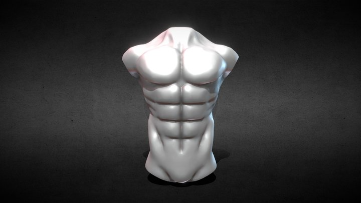 Chest Study 3D Model