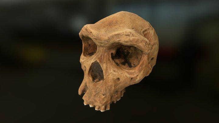 Human Skull Reconstruction 3D Model