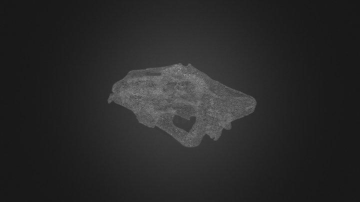 Lion Skull 3D Model